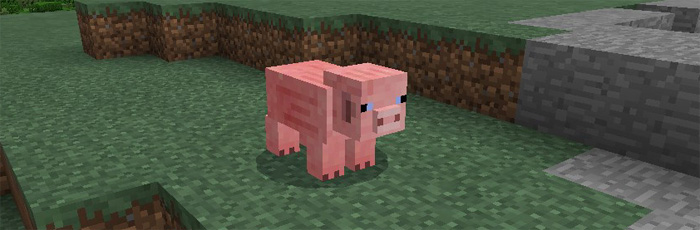 more-pigs-2