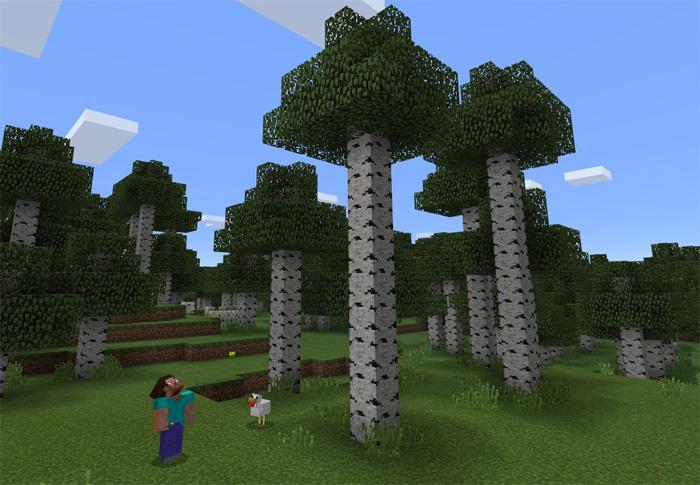 432666080: Rare Tall Birch Forest | Minecraft PE Seeds