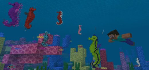 Hippocampus (Seahorse) Resource Pack